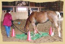 Horse clinic crossing tarp.