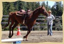 Circling a horse.