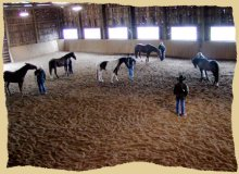 Horse clinic overview.