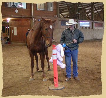 Horse clinic training.