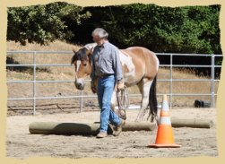 Click to enlarge. Good horsemanship starts on the ground.