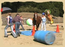 Horse training with the Equine Research Foundation