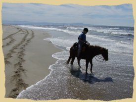 Horseback riding in the surf.