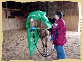 Click to enlarge. Training horses to stand quietly during a positive reinforcement clinic with the Equine Research Foundation.