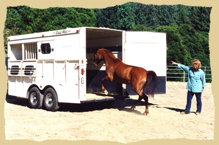 Click to enlarge. Trailer loading at liberty at the Equine Research Foundation.