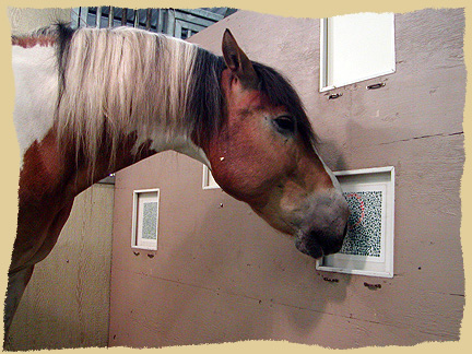 Horse color vision.