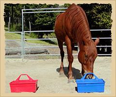 Horse demonstrating preference.