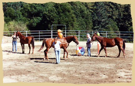 Click to enlarge. Horse groundwork on a learning vacation with the Equine Research Foundation.