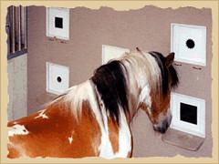 Horse identifying size.