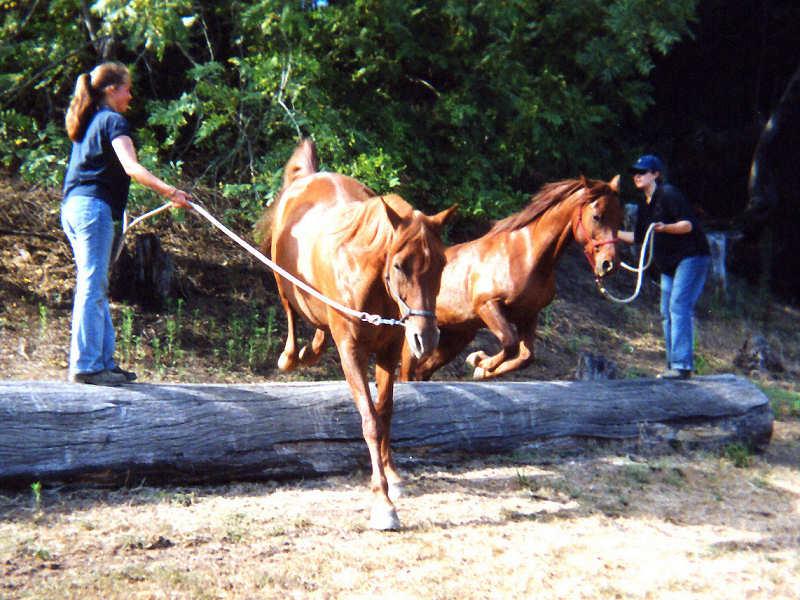 horse photo horse jumping