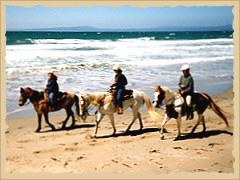 Horse riding Pacific Coast with the Equine Research Foundation.