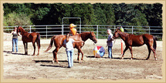 Horsemanship - group games.