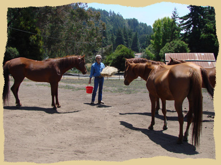 Click to enlarge. Horses wait politely for hay and grain at the Equine Research Foundation.