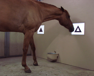 Horse memory.