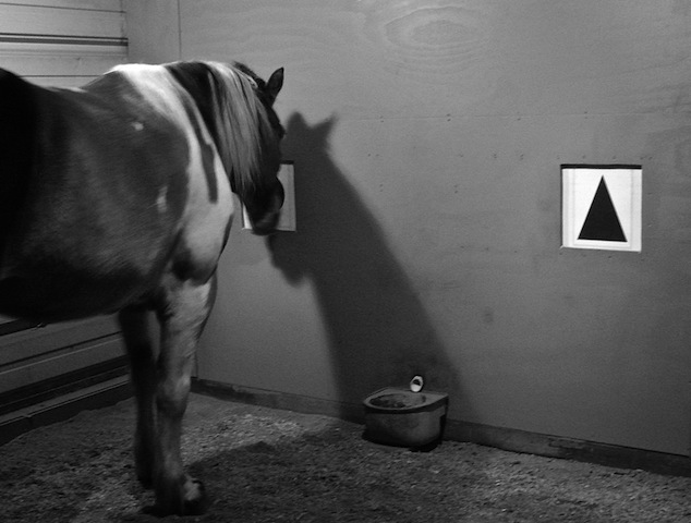 Horse night vision.