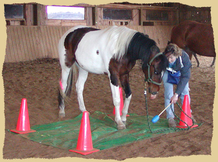 Click to enlarge. Helping horses overcome fear or resistance during a positive reinforcement clinic with the Equine Research Foundation.