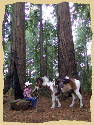 Click to enlarge. Horse riding among redwoods on a learning vacation at the Equine Research Foundation.