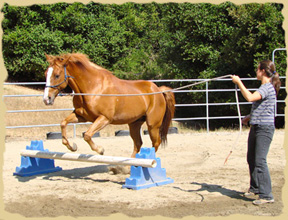 Click to enlarge. Do it all with groundwork first on horse vacations with the Equine Research Foundation.