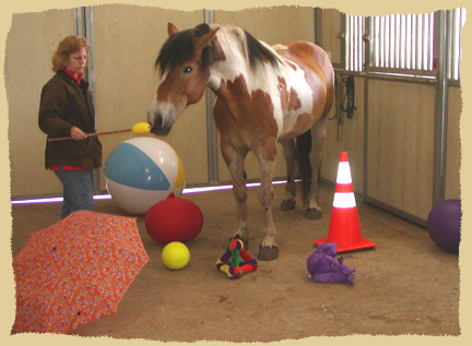 Click to enlarge. Positive reinforcement training at the Equine Research Foundation.
