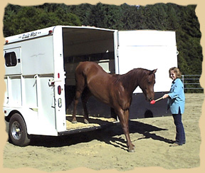 Equine Research Foundation consultation helps train behaviors with positive reinforcement. Click to enlarge.