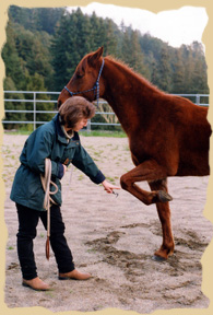 Training useful behaviors at the Equine Research Foundation. Click to enlarge.