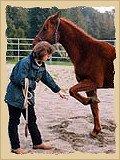 Horse lifting feet.