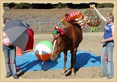 Horse overcoming fear.
