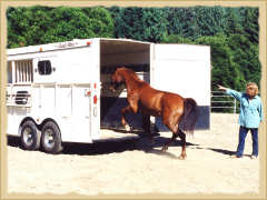 Click to enlarge. Horse trailer loading during a learning vacation with the Equine Research Foundation.
