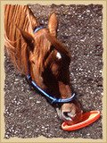 Horse playing Frisbee.