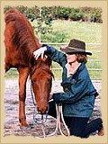 Horsemanship - haltering.