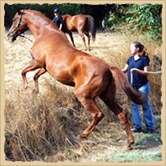 Horsemanship - jumping.